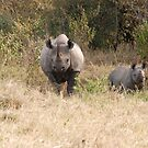 Black Rhino with calf.. by CriscoPhotos