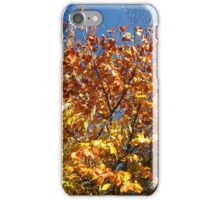 Sunlight on Russet Leaves iPhone Case/Skin