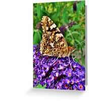 Painted Lady, Resting On Summer Buddliah Greeting Card