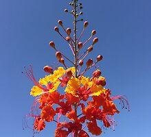 Desert Flower by PoKitty
