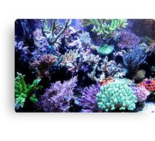 Colorful Coral Canvas Print