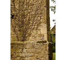 Vines of St. Mary's Photographic Print