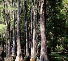 Florida Beauty 3 by andreaanderegg