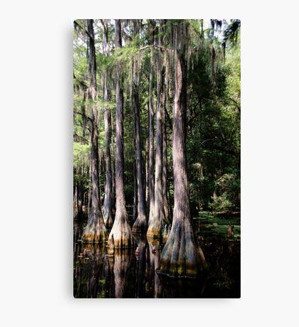 Florida Beauty 3 Canvas Print