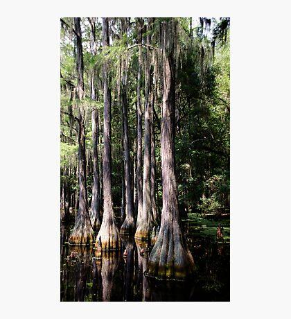 Florida Beauty 3 Photographic Print