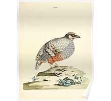 New Illustrations of Zoology Peter Brown 1776 0087 Birds Poster