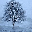 So Cold I'm Blue-Monterosi, Italy by Deborah Downes