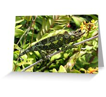 Three Horned Chamelion Greeting Card