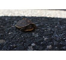 Why the turtle crossed the road Photographic Print