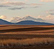 Wheat Fields and Longs Peak by nikongreg