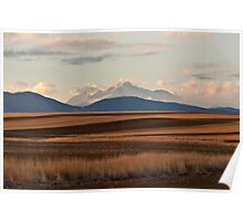 Wheat Fields and Longs Peak Poster