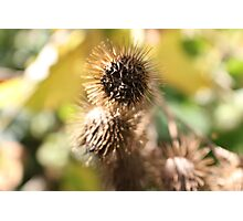 Spiky balls Photographic Print