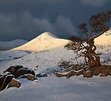 Hawthorn Tree, Torrin, Isle of Skye. Scotland. by photosecosse /barbara jones