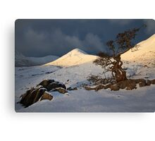 Hawthorn Tree, Torrin, Isle of Skye. Scotland. Canvas Print