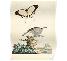 New Illustrations of Zoology Peter Brown 1776 0109 Birds Poster