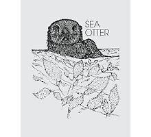 Sea Otter Sketch Photographic Print