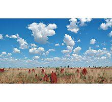 Termite Graveyard Photographic Print