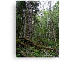 Rainforest Walk in Olympic National Park Canvas Print