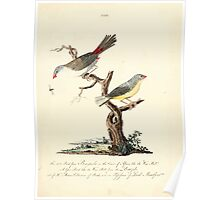 New Illustrations of Zoology Peter Brown 1776 0141 Birds Poster