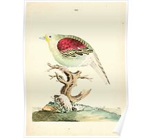 New Illustrations of Zoology Peter Brown 1776 0095 Birds Poster