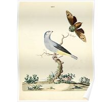 New Illustrations of Zoology Peter Brown 1776 0125 Birds Poster