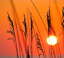 Sunrise through the Grass by vtmichael