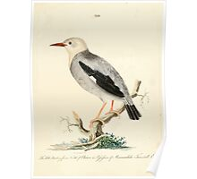 New Illustrations of Zoology Peter Brown 1776 0103 Birds Poster