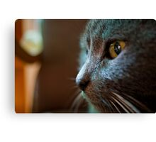 The Feline Persuasion Canvas Print
