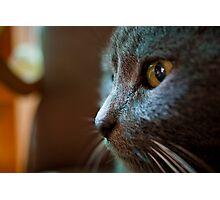 The Feline Persuasion Photographic Print
