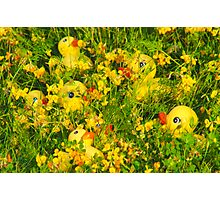 """""""Hide and Seek"""" - rubber duckies hiding in the flowers Photographic Print"""