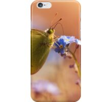 Brown and yellow butterly on forget me not flower iPhone Case/Skin