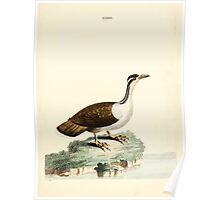 New Illustrations of Zoology Peter Brown 1776 0187 Birds Poster