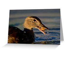 Feeding Wood Duck Greeting Card