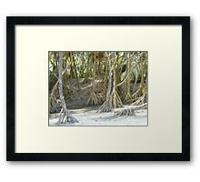 Pandanus Trees - Port Resolution Framed Print
