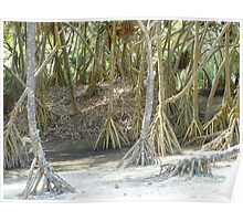 Pandanus Trees - Port Resolution Poster