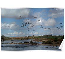 wet season wildlife Poster