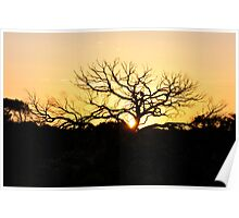 Silhouette Tree Outback Woomera Poster