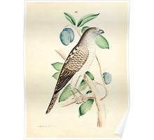 New Illustrations of Zoology Peter Brown 1776 0025 Birds Poster