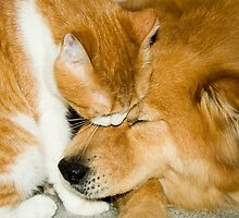 """Comforting Companions"" cat and dog snuggling by John Hartung"
