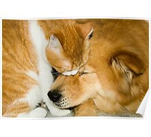 """""""Comforting Companions"""" cat and dog snuggling Poster"""