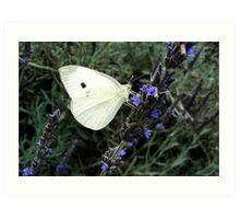 lavenda and wings Art Print