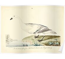 New Illustrations of Zoology Peter Brown 1776 0191 Birds Poster