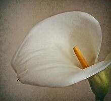 ~ Pure and Simple ~ by Lynda Heins