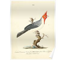 New Illustrations of Zoology Peter Brown 1776 0113 Birds Poster