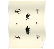 New Illustrations of Zoology Peter Brown 1776 0237 Insects Poster