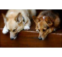 Two Pooped To Participate Photographic Print