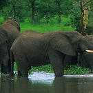 Elephant Shower by naturalnomad