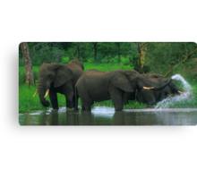 Elephant Shower Canvas Print