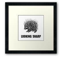 Sharp Porcupine Framed Print