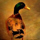 A duck ... by Chris Armytage